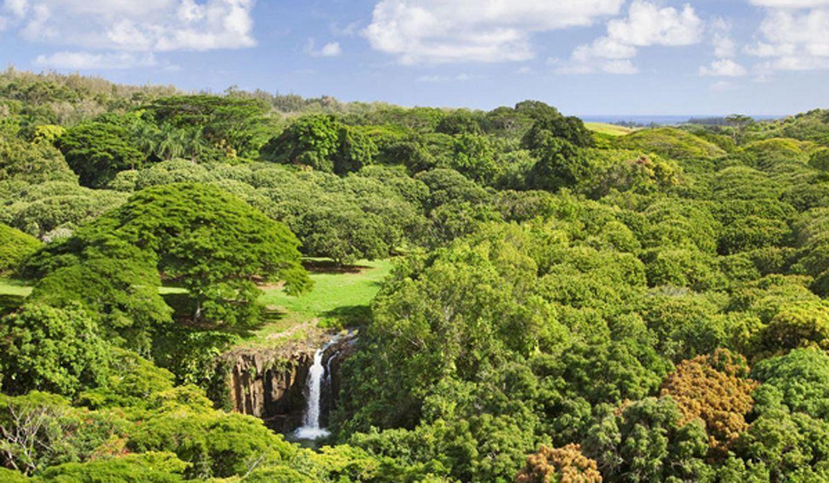 Dating sites kauai